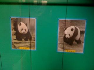 panda2009031.jpg